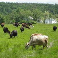 Hawthorne Farms