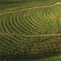 Biodynamic Vineyard