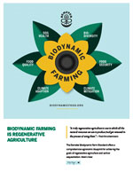 Biodynamic is Regenerative Artwork - Sunflower